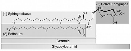 Structure of Ceramides and Glycosylceramides in plants